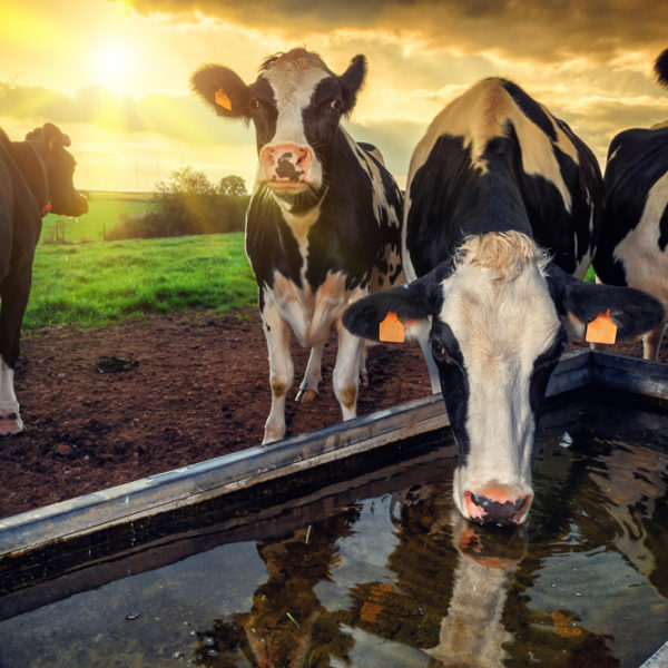 CHD-FA an Antibiotic Alternative for Animal Agriculture